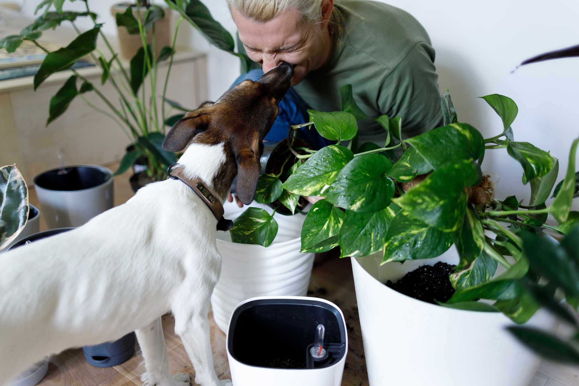 Man in green jacket surrounded by plants is being kissed by a dog